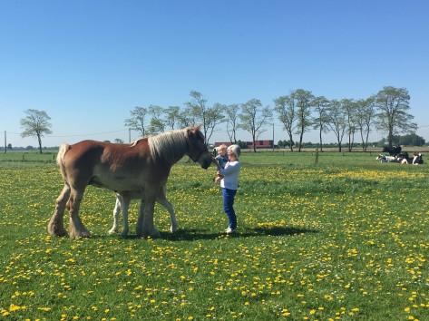 Kleine kinderen houden van paarden